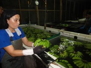 バナナ洗い